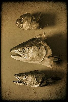 Fischköpfe - p1028m972616 von Jean Marmeisse