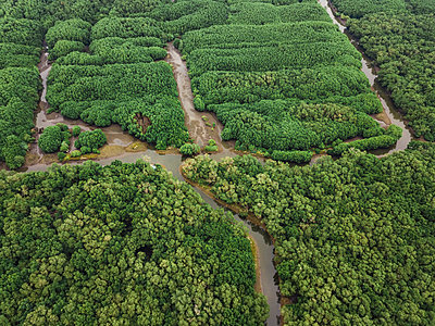 Aerial view of the mangrove forest - p1166m2094110 by Cavan Images