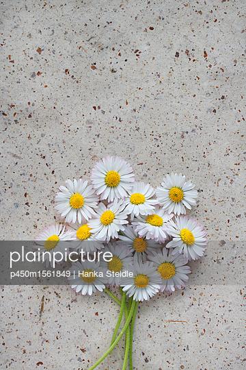 Gänseblümchen    - p450m1561849 von Hanka Steidle