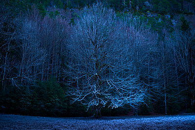 Bare trees on field at dusk - p1166m1226231 by Cavan Images