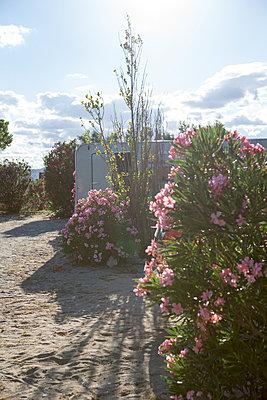 Campinplatz im Gegenlicht - p505m1195402 von Iris Wolf