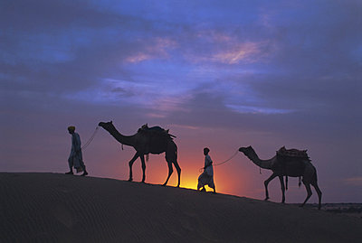 Camels silhouetted against the sunset, Thar Desert, near Jaisalmer, Rajasthan State, India, Asia - p8710190 by Gavin Hellier
