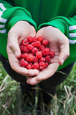 Raspberries - p956m748744 by Anna Quinn
