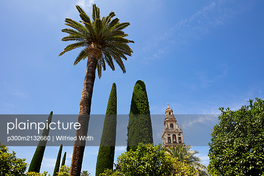 Spain, Andalusia, Cordoba, Torre del Alminar of Mosque?Cathedral and palms - p300m2132660 by Wilfried Wirth