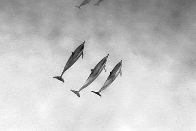 Dolphin - p3432726 by Sean Davey