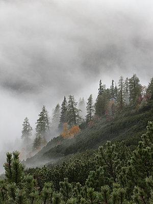 Bergwald im Nebel - p625m1092236 von A Lampe