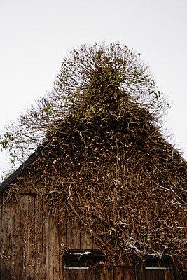 Overgrown old house - p1621m2263340 by Anke Doerschlen