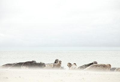 Sandsturm - p249m1055105 von Ute Mans