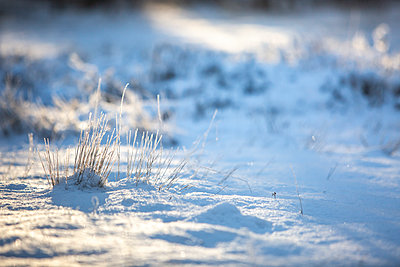 Close up of snow at sunrise - p300m2250308 by Anke Scheibe