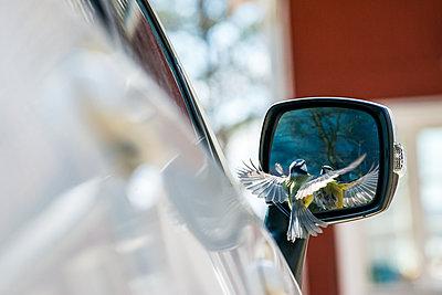 Bird near side mirror - p312m2050701 by Fredrik Schlyter