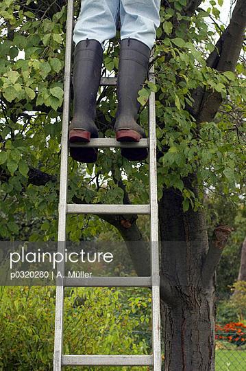 Pflaumenbäume Schneiden plainpicture bildagentur für authentische fotografie