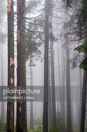 Tote Bäume im Harz - p171m854021 von Rolau