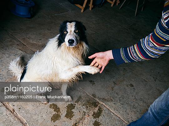 Hund gibt Pfötchen - p358m1160205 von Frank Muckenheim