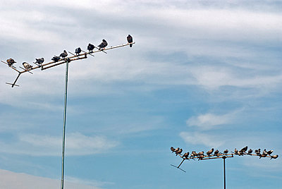 Pigeons on antenna mast - p229m1044383 by Martin Langer