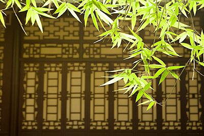 p429m1226834 von Fang Zhou