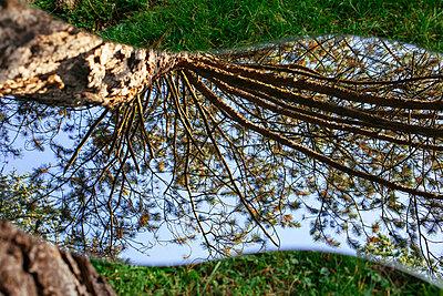 Spiegelung der Natur - p728m1193631 von Peter Nitsch