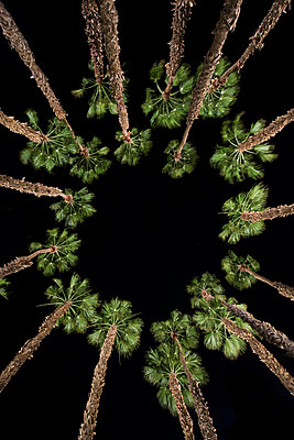 Directly below shot of palm trees against clear sky during night - p1166m1509103 by Cavan Images
