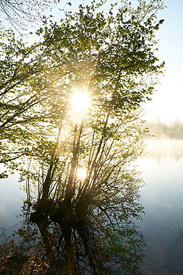 Tree in backlit on the bank of a lake - p1312m2275842 by Axel Killian