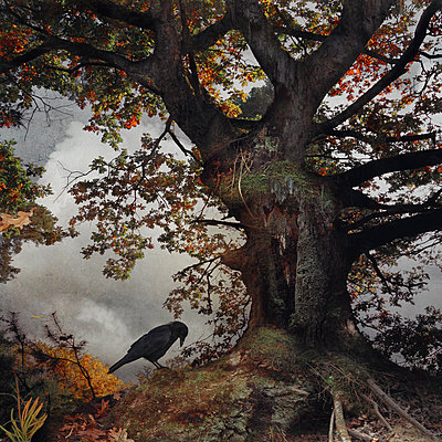 Black Winged Messenger Part III - p1633m2208888 von Bernd Webler