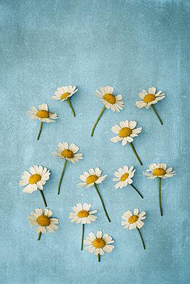 Daisy - p1228m1162597 by Benjamin Harte