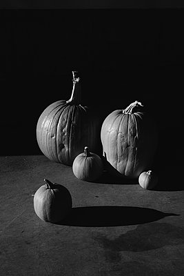 Pumpkin Still Life - p1262m1184869 by Maryanne Gobble