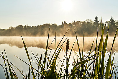 Grass with dew drops on the bank of a lake - p1312m2275830 by Axel Killian