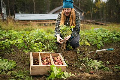 Woman digging potatoes - p312m2080655 by Fredrik Ludvigsson