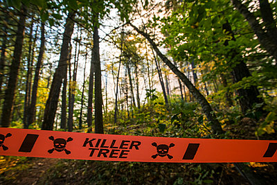 A Warning Tape Across A Trail During The Early Phases Of A Controlled Burn - p343m1223793 by Joe Klementovich