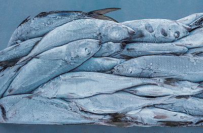 Frozen mackerels - p390m1563826 by Frank Herfort
