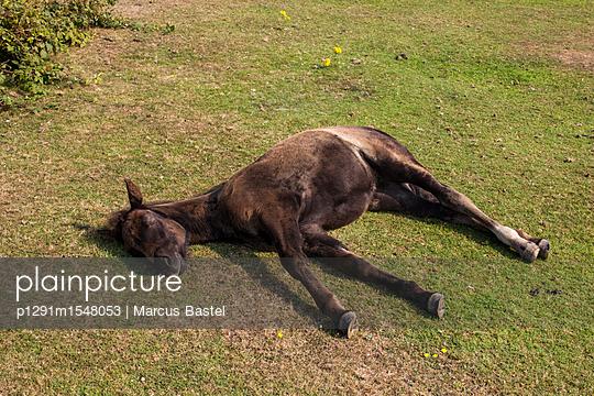 Sleeping Horse - p1291m1548053 by Marcus Bastel