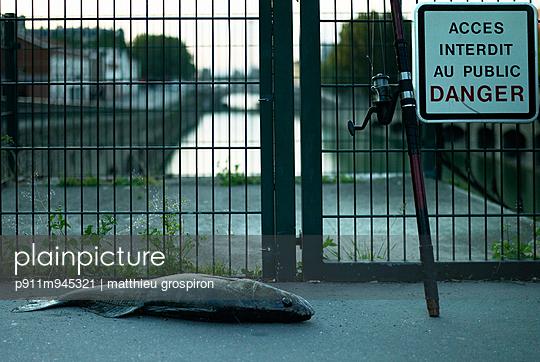 Toter Fisch - p911m945321 von Émile Zwaltek