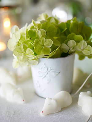 light green hydrangea in pot with sugar mice - p349m2167820 by Polly Wreford