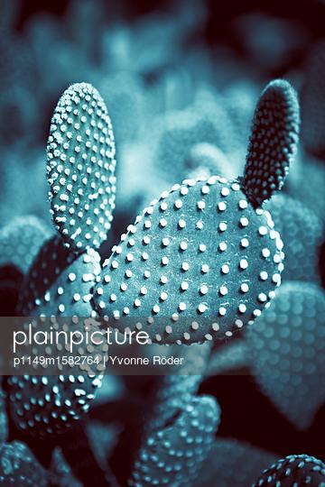 Kaktus in Italien - p1149m1582764 von Yvonne Röder