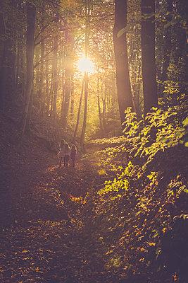 Three little girls walking through autumn forest - p300m983555f by Sandra Roesch
