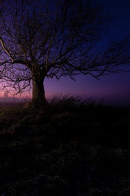 Blattloser Baum im Sonnenuntergang - p1057m2142805 von Stephen Shepherd