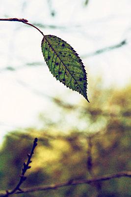 Autumn leaf - p879m1526134 by nico