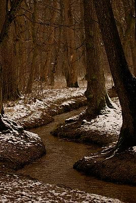 Dunkler Wald - p9793241 von Raupach
