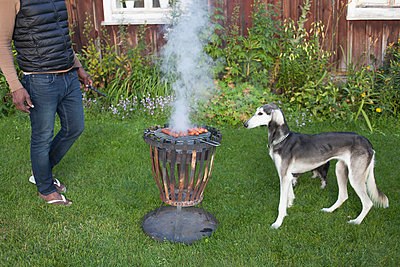 Greyhound looking at barbecue grill while standing by man in yard - p301m1534951 by Isabella Ståhl