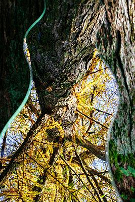 Spiegelung der Natur - p728m1193630 von Peter Nitsch