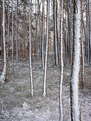 Snow-covered trees - p370m2020684 by David Hartfiel