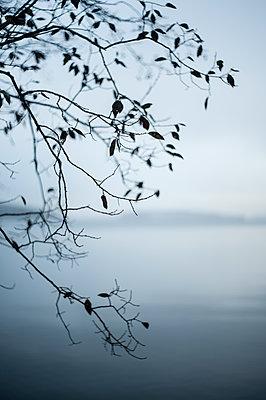 Tree by the lake - p971m1503518 by Reilika Landen