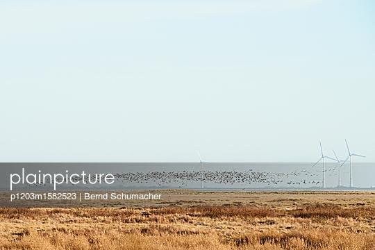 Zugvögel über den Salzwiesen auf Spiekeroog - p1203m1582523 von Bernd Schumacher