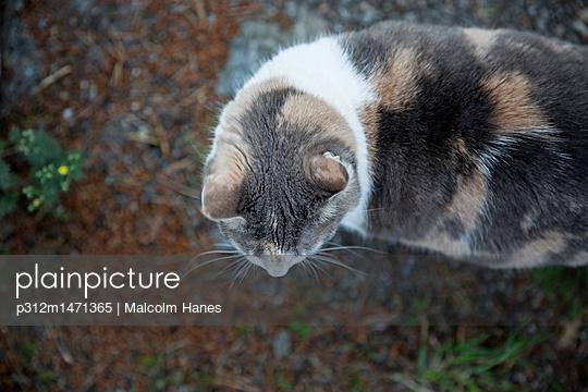 p312m1471365 von Malcolm Hanes