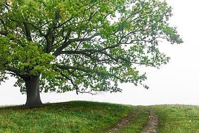 Eiche, Waldgebiet Schorfheide - p089m933192 von Gerd Olma