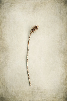 Dead plants - p1228m1425449 by Benjamin Harte