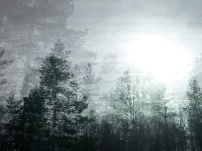 Schemenhafte Landschaft - p945m1487830 von aurelia frey