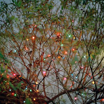 Lichterkette in den Zweigen - p949m658305 von Frauke Schumann