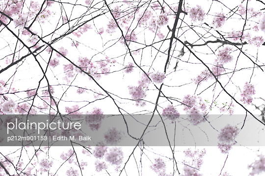 Kirschblüte II - p212m901159 von Edith M. Balk