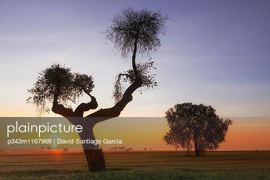 p343m1167968 von David Santiago Garcia