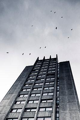 Birds flying around dark building - p1228m1169449 by Benjamin Harte